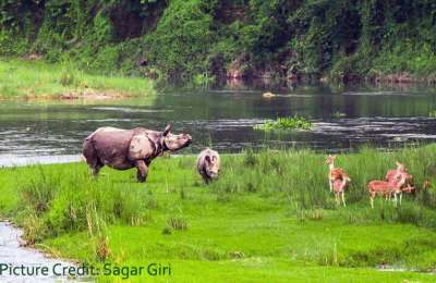 Chitwan National Park, WWF and Rights of Indigenous Peoples and Local Communities.